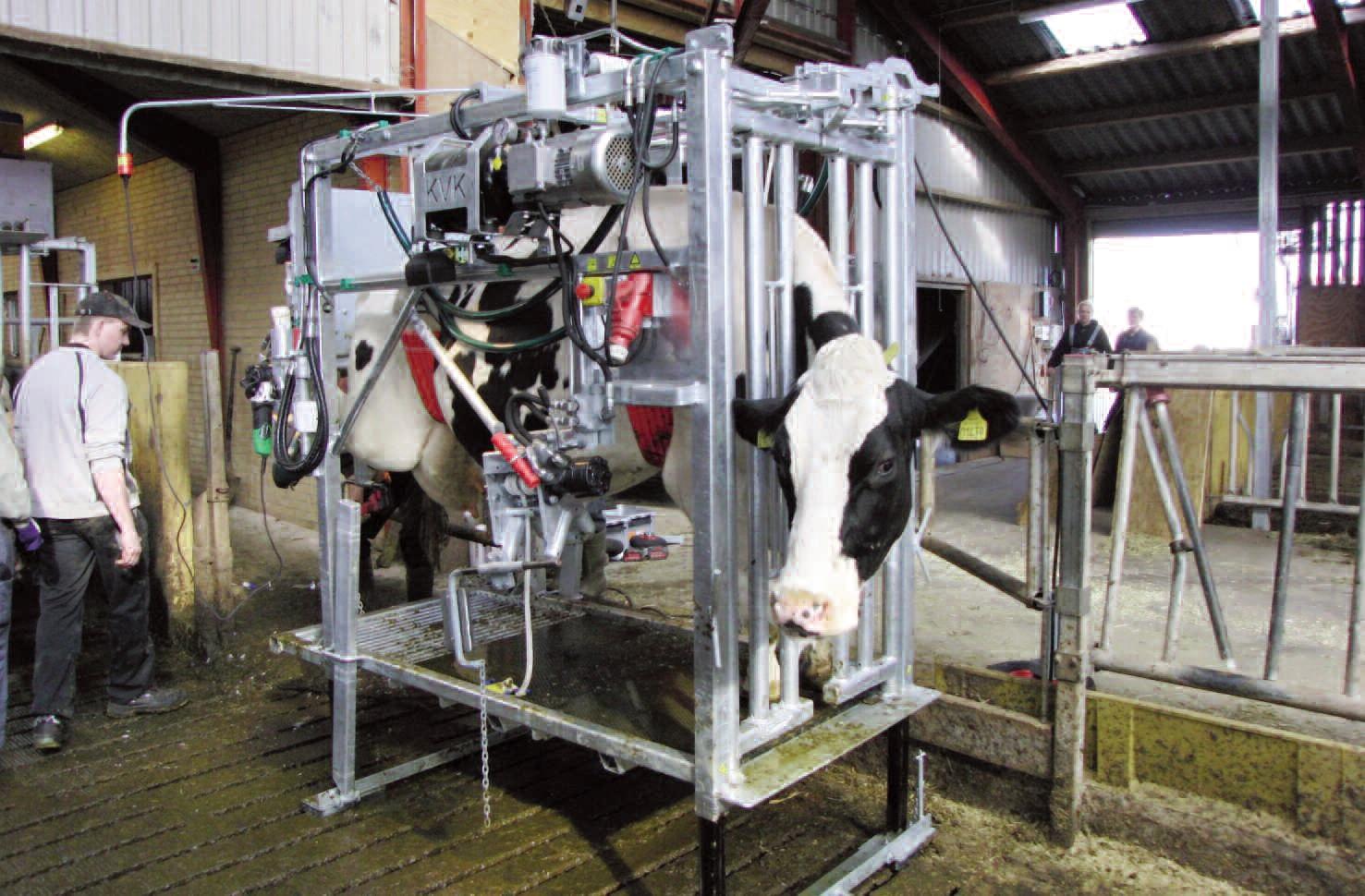 Станок для обработки копыт KVK Hydra Klov SP 650-2