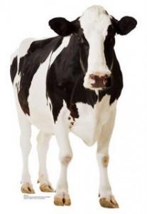 Стандарты доения коров