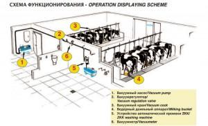 Схема функционирования доильной ведерной системы