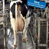 Автоматическая ванна для промывки копыт коров